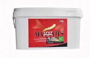 maggots-catalogue